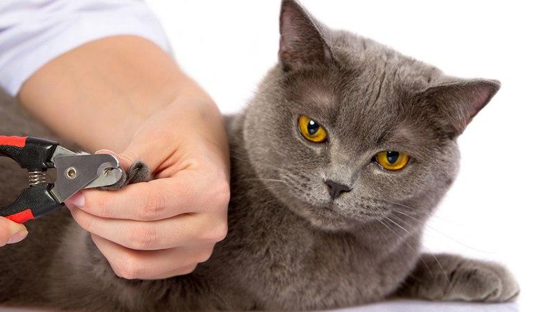 Следим за ростом когтей у кошки и вовремя их стрижем