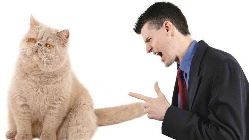 Как перевоспитать злого кота