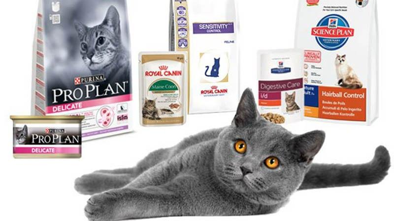 Корма для котят и кошек: какой выбрать?