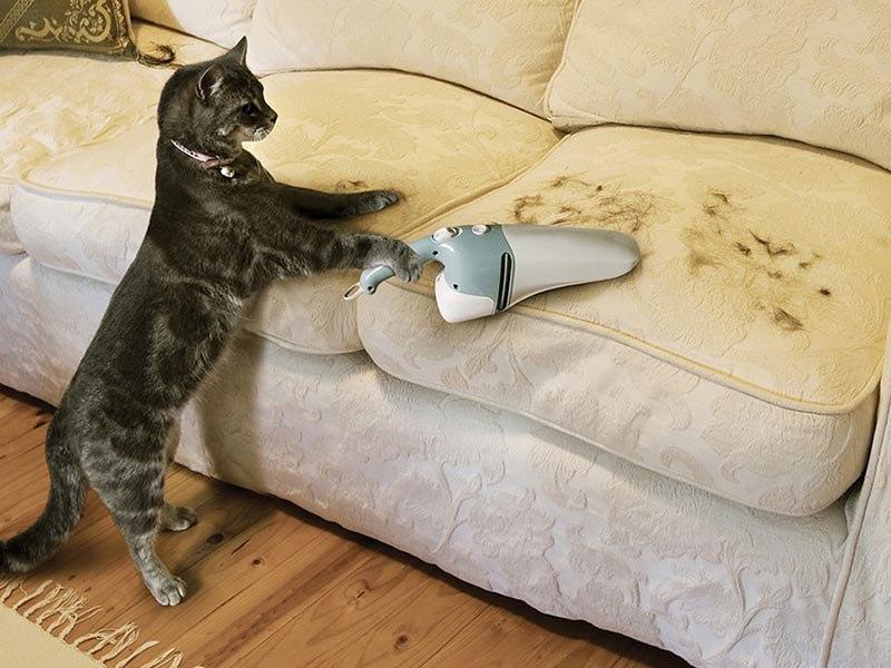 Когда у кошек линька