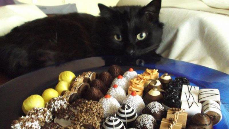 Какие лакомства можно давать кошкам