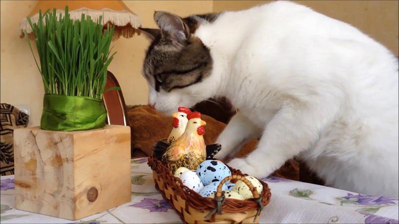 Как часто кормить кошку яйцами