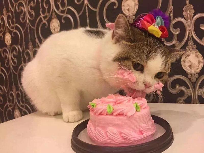 Можно ли баловать кошку сладкими десертами