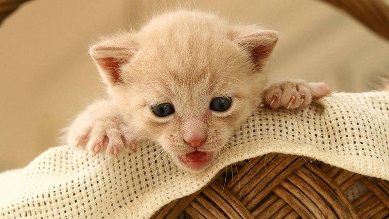 Котенок открыл глазки, но еще не видит окружающий мир