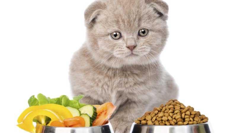 Можно чередовать сухой корм с натуральной едой