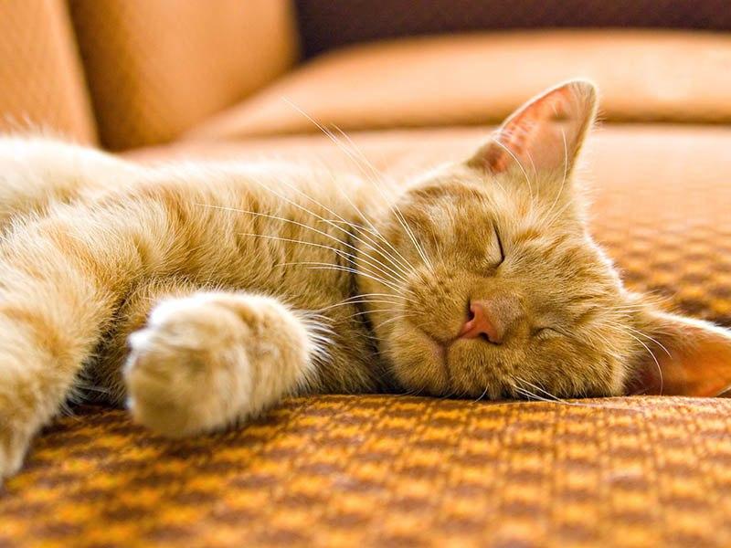 Кошка любит долго спать