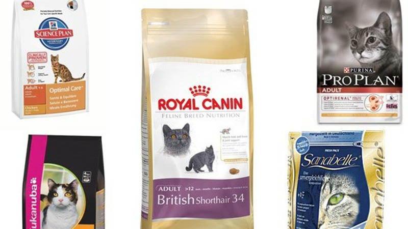 Премиум и супер премиум корма принесут пользу котенку