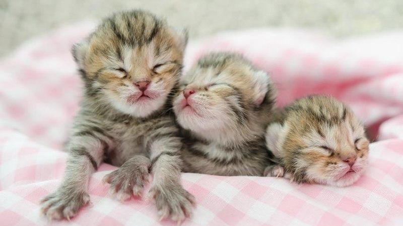 На какой день котенок может открыть глазки