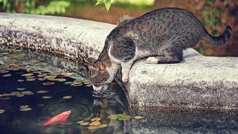 Чрезмерная жажда у кошки - побочные эффекты лекарств