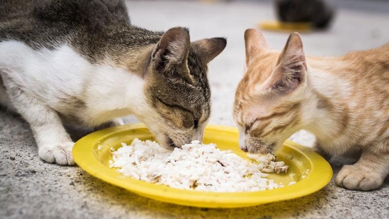 Какие каши полезные для кошки