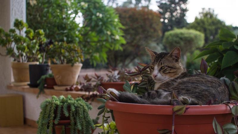 Почему кошка портит комнатные растения