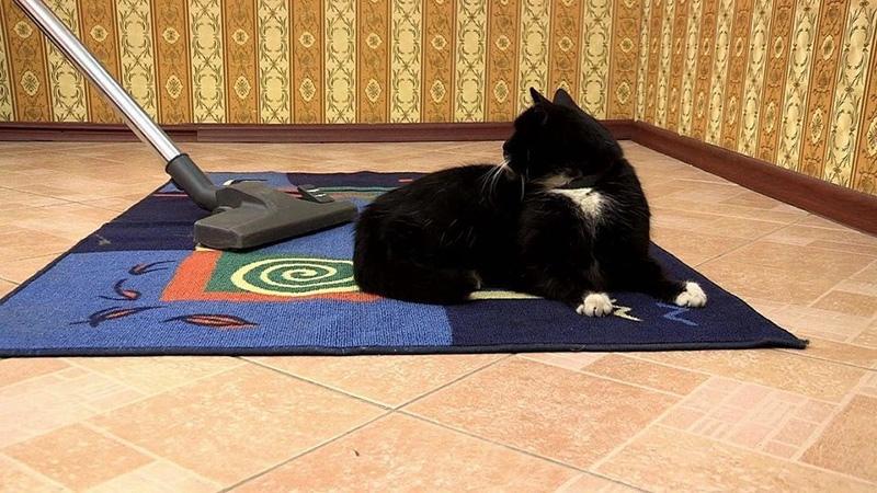 Почему коты гадят в квартире