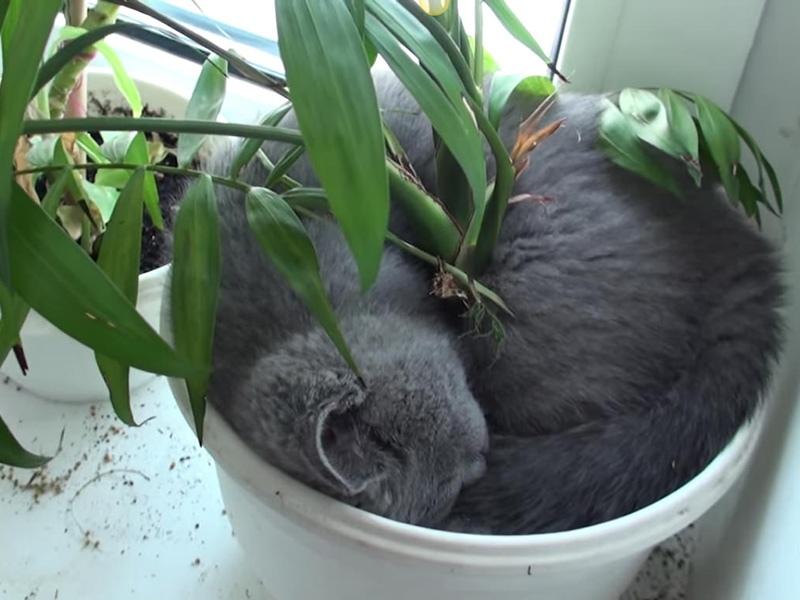 Отучаем кошку лазить в цветочные горшки