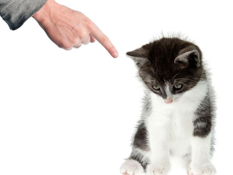 Эффективные способы отучить кота метить территорию в доме