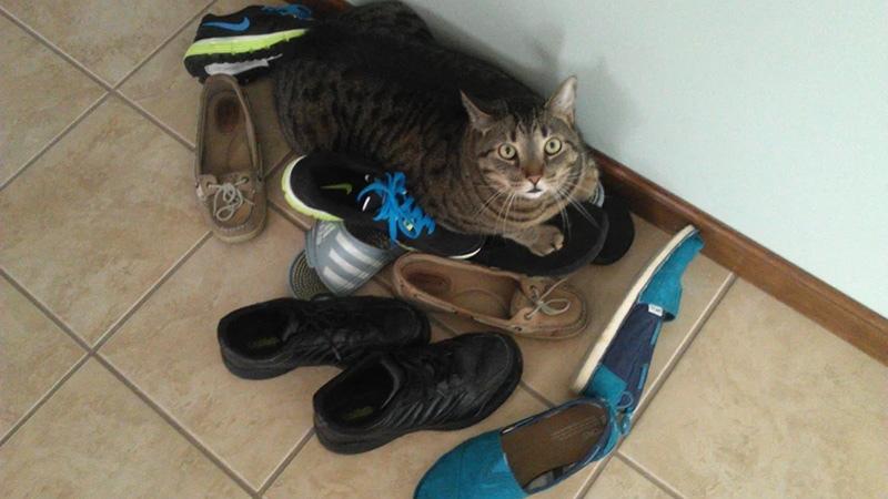 Кот ходить в туалет в неположенное место из-за обиды