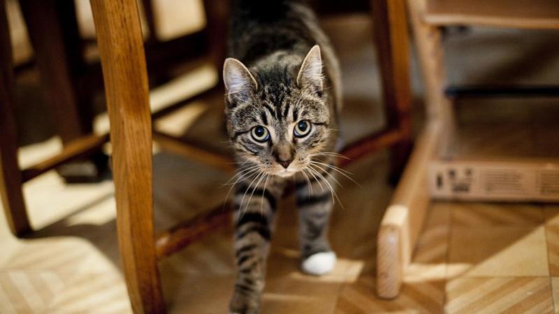 Как бороться с запахом кошачьей мочи