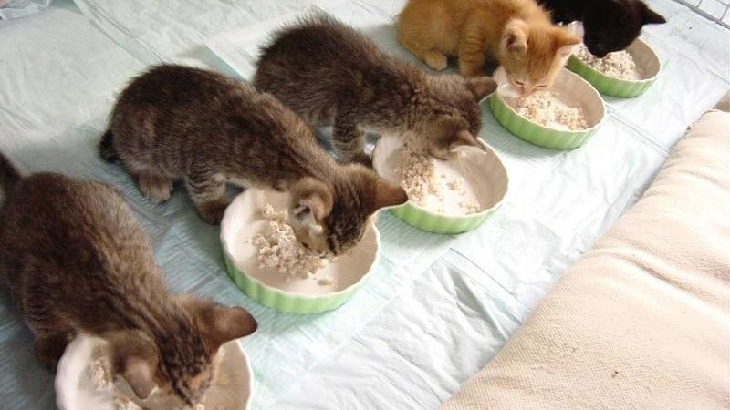 Полезные и вкусные крупы для кошек