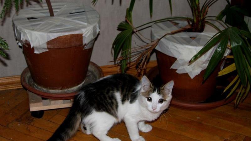 Что делать, если кошка успела съесть ядовитые растения в доме
