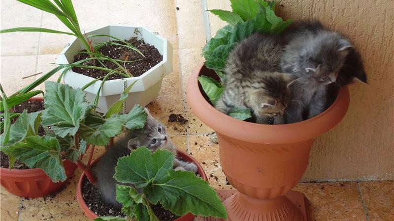 Как отучить кошку гадить в горшках с цветами