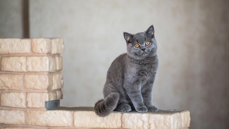 Важно понять причину - почему кот метит углы