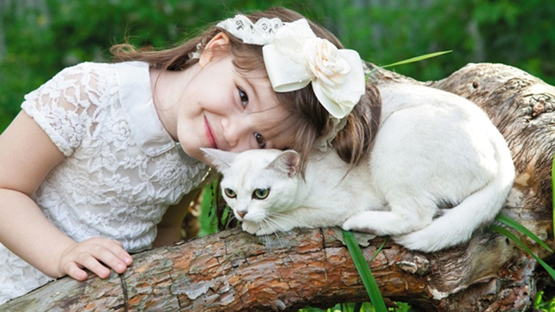 Добрые и нежные кошки-бурмилла