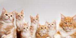 Как принять роды у кошки, если она рожает в первый раз?