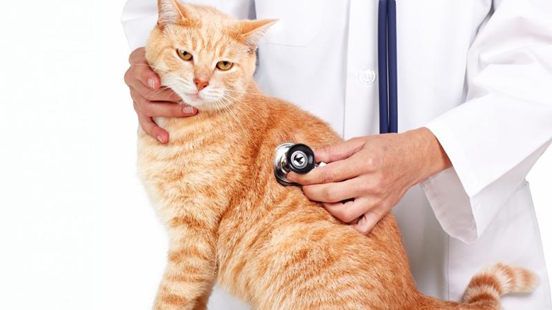 Устраняем основную причину неприятного запаха из рта у кошки