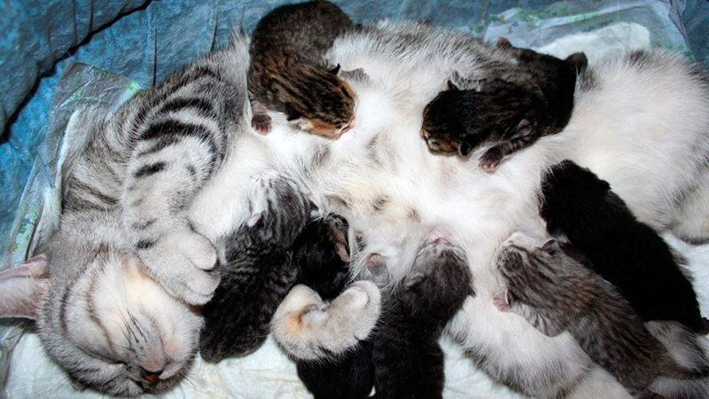 Кошка родила много котят