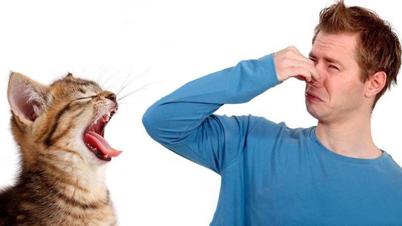 Неприятный запах изо рта у котенка