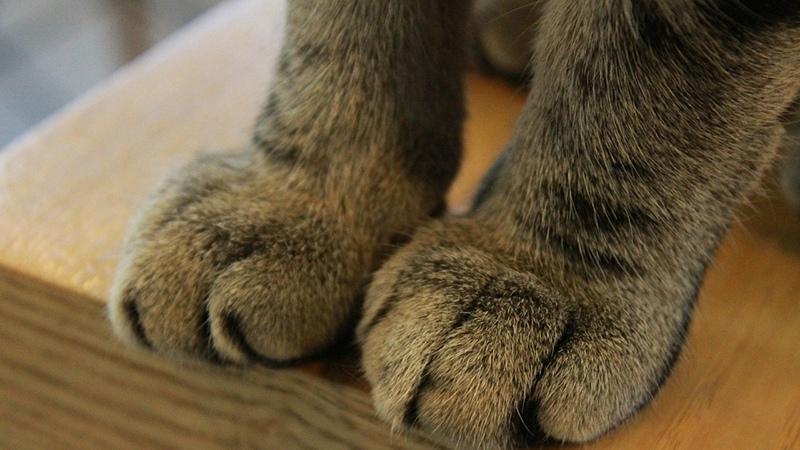 Положительные изменения после удаления когтей у кошки