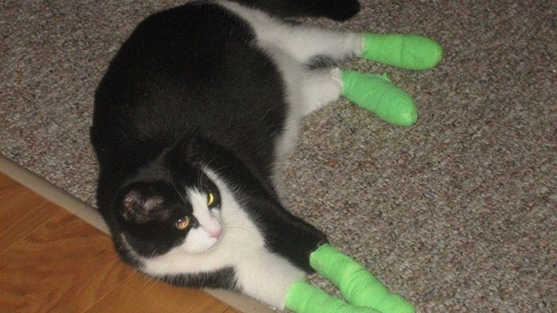 Уход за кошкой после онихэктомии