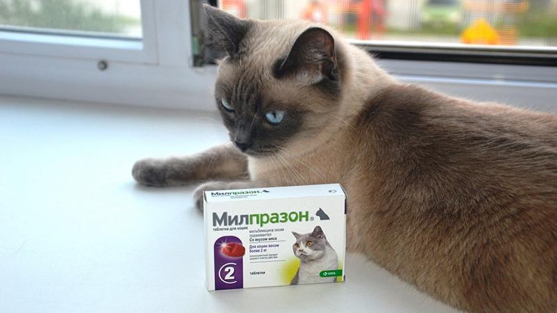 Котам дают лекарства для животных