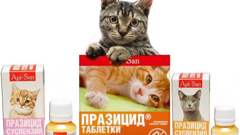 Можно ли давать кошкам таблетки для людей