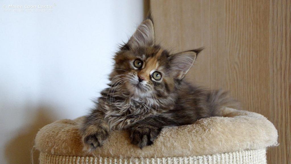 корма-для-котов