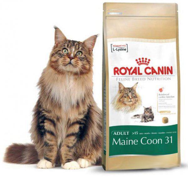 роял канин для котов