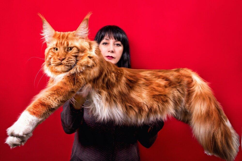 этой самые крупные коты в мире фото наших